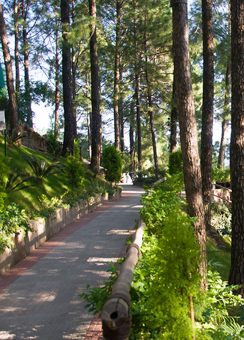 kasauli-hills-resort-premium-activities-attractions-rooms-cottages-resort-hotels-villas-accommodation-activities-nearby-places