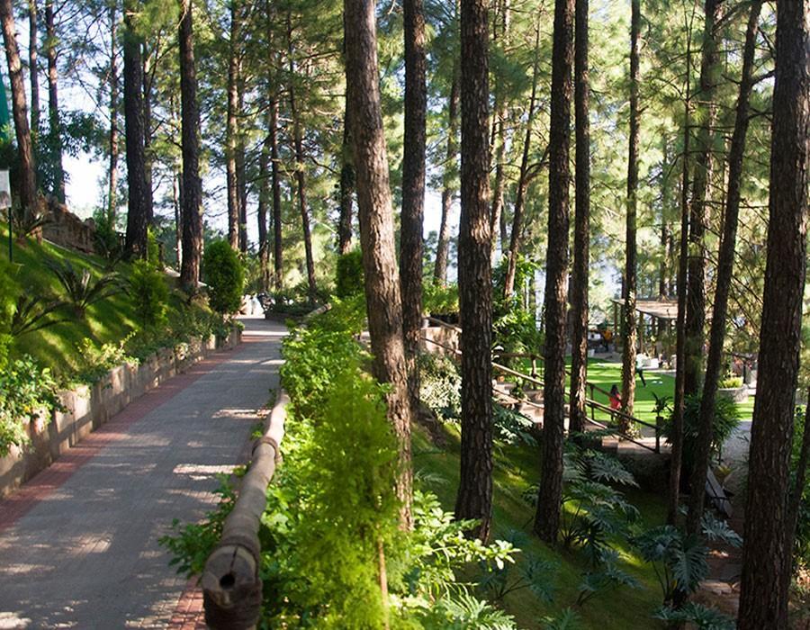 kasauli-hills-resort-cottage-rooms-resorts-hottels-villas-accommodation-valley-views-gaming-activities-oter-area-jungle-resort